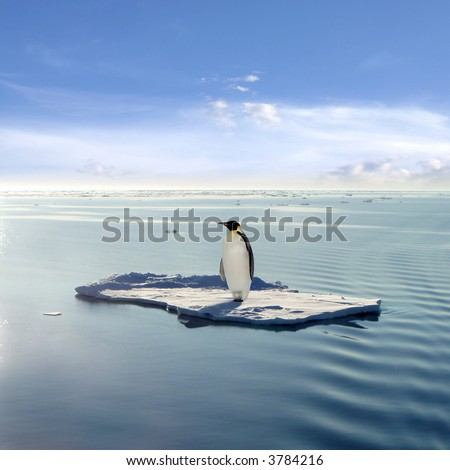 Emperor Penguin on a Floating Ice Patch - stock photo