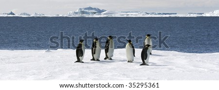 Emperor penguins (Aptenodytes forsteri) on the ice in the Weddell Sea, Antarctica