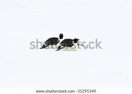 Emperor penguins (Aptenodytes forsteri) sliding on the ice in the Weddell Sea, Antarctica