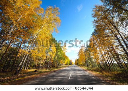 Empty asphalt road and alley with birches and blue sky
