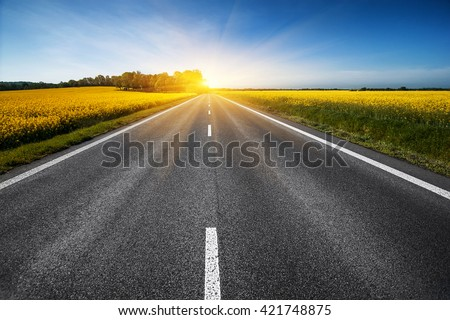 empty asphalt road and floral field of yellow flowers. natural  summer background #421748875