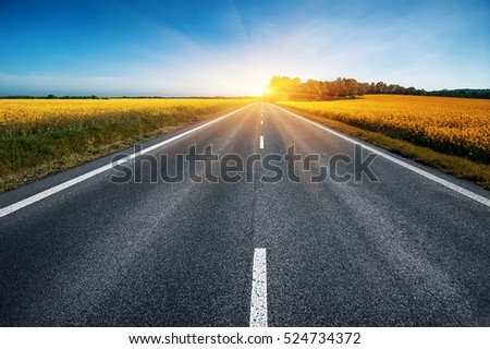 empty asphalt road and floral field of yellow flowers. travel concept #524734372
