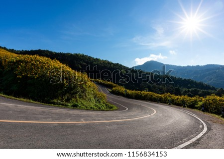 Empty asphalt road through Mexican sunflower flower field  #1156834153