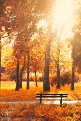 Empty bench in the park, in autumn golden and yellow colors; autumn background