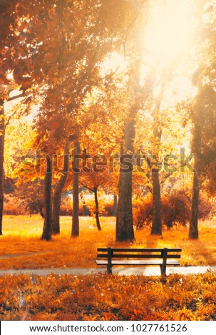 Empty bench in the park, in autumn golden and yellow colors; autumn background #1027761526