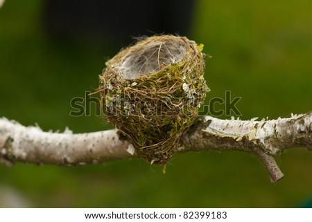 empty bird nest on the branch - stock photo