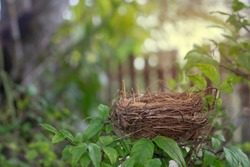 Empty Bird's nest on branches tree in the nature