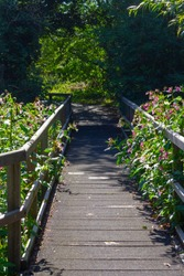 Empty bridge surrounded by flowers leading into the forest near Tottenham Hale in the Lee Valley