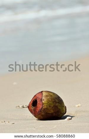 empty coconut lying on the beach