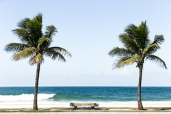 Empty Concrete bench between two palm trees in front of a beach