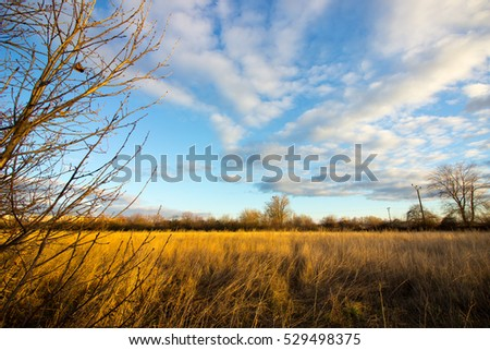 Empty dried field with clouds on blue sky above in early winter.