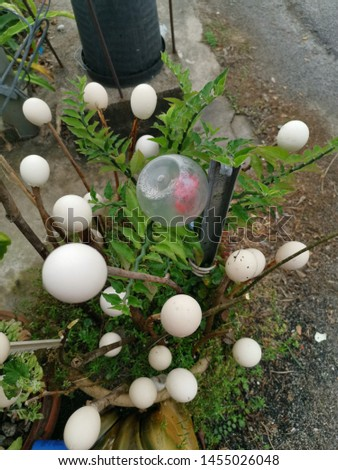 empty eggs shell use to decorate the garden.