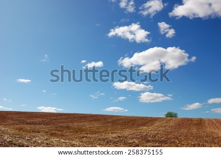 Empty field after finished harvesting with a single tree under cloudy blue sky #258375155