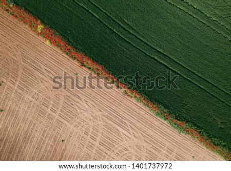 empty field and wheat field