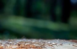Empty Forest Soil Surface with Pine Needles in the Foreground and a Blurry Background with Copy-Space can be Used to Display Your Products.