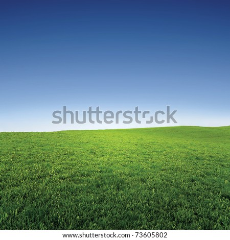 empty grass field