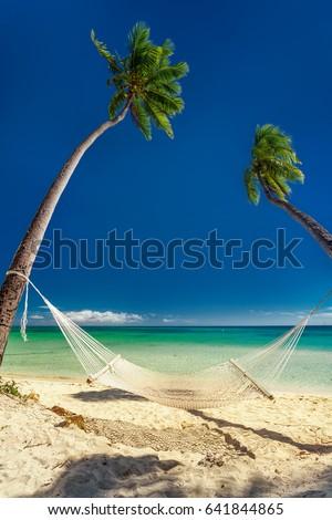 Empty hammock under tall palm trees, tropical beach, Fiji island