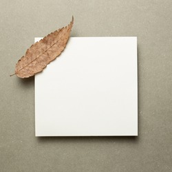 Empty memo paper with dry autumn leaves on gray background. top view, copy space