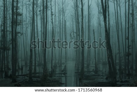 Photo of  Empty, misty swamp in the moody forest with copy space