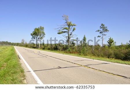 empty road and trees