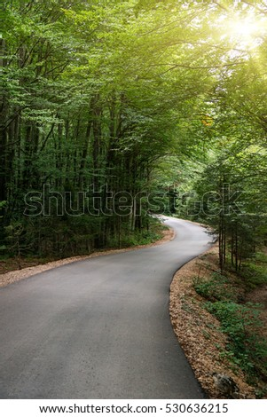 Empty road going in forest - Shutterstock ID 530636215
