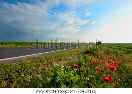 empty road near the poppies