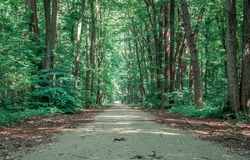 Empty road or path in Baneasa forest, near Bucharest. lonely walkway through the woods.