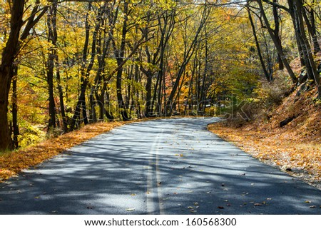 Empty road through a golden fall forest in New York