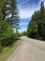 Empty road to a mountain with tall green trees on the sides of the road. Summer in Montana, USA, deciduous trees