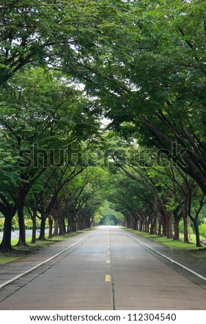 empty road with tree on both side