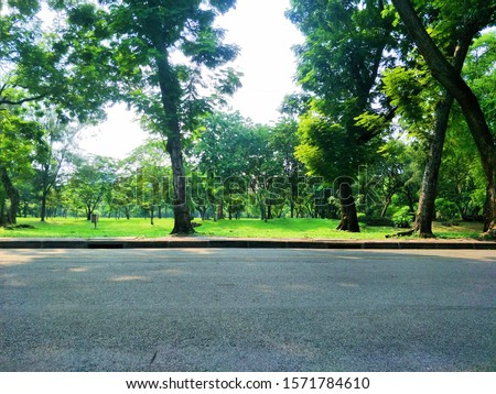 Empty Road With Tree on Grass in Park, Landscape in Nature, Concept in Nature, Garden, Space, Empty, Silent of Nature Concept, Empty Space for Text