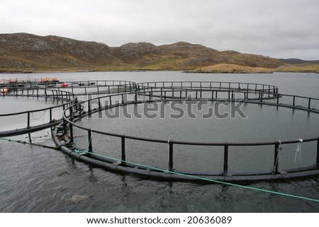 Empty salmon cages brought in for a clean out.