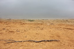 Empty sandy beach by the river with an old tree branch in the foreground. Quiet landscape in warm colors. Sandy beach and river landscape