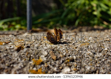 Empty seed pod sitting on the ground