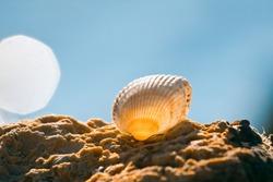 empty shell of marine bivalve mollusk Cerastoderma lamarcki on a coquina stone, blue summer sky, tourist vacation concept