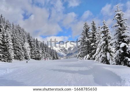Empty ski slope with fresh snow and snowy trees in background  Zdjęcia stock ©