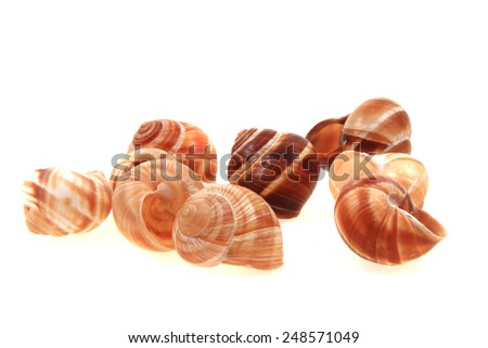 empty snails shells