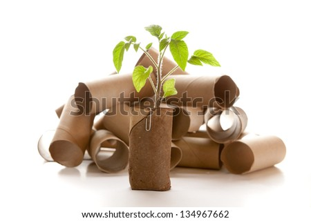 Empty toilet paper roll recycled as a seedling planter