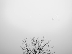 Empty tree landscape with birds perched on branch and birds flying on white sky