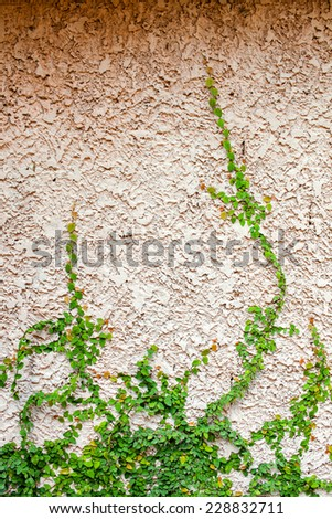 Empty wall with leaf side of frame - vintage effect style picture