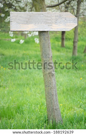 empty Wooden sign on a tree / shield