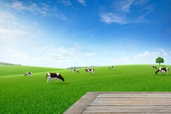 Empty wooden table top with blur green meadow, cows, blue sky with clouds background.