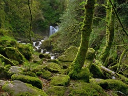 Enchanted Forest and creek near Torc Waterfall, Killarney National Park, County Kerry, Ireland