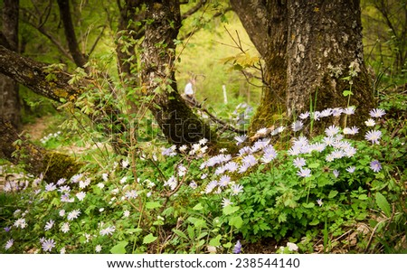 Enchanted forest in the spring with flowers
