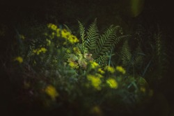 Enchanted forest, magical herbs. Green witch plants, mystical woodland backgroundб Yelloe meadow flowers