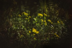 Enchanted forest, magical herbs. Green witch plants, mystical woodland background Yelloe meadow flowers