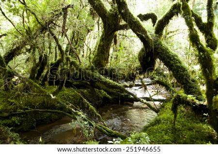 Enchanted Forest - Queulat National Park - Chile