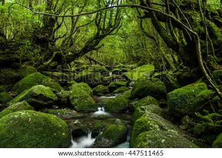 Enchanted Forests of Yakushima, Japan.