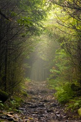 Enchanted Trail Roan Mountain Tennessee