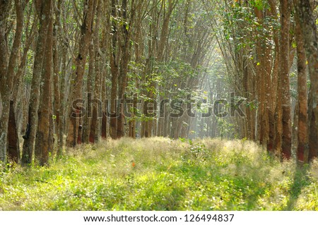 Enchanting Forest Path